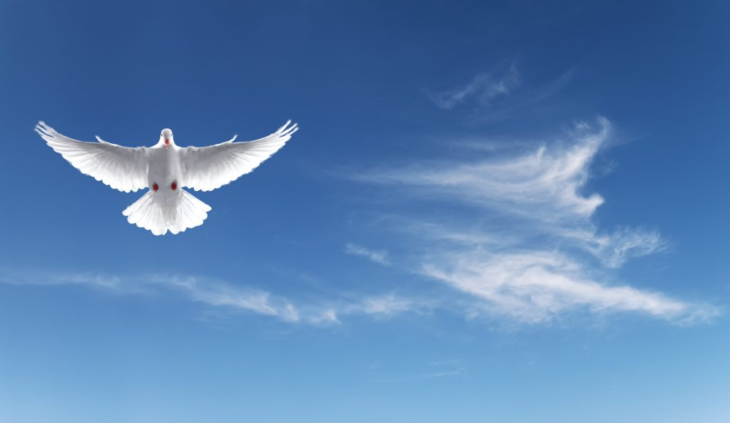 White dove in a blue sky, symbol of faith